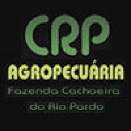 CRP: bons resultados com pivô central na pecuária e agricultura