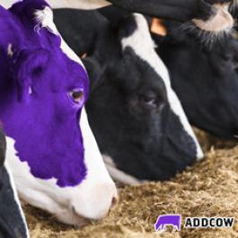 Curso: Resfriamento de vacas leiteiras no Brasil